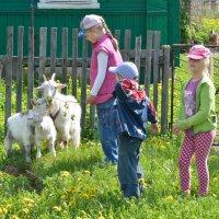 каникулы в деревне :: Владимир Фомин