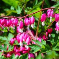 Лиловые весенние цветочки :: Виктор Мушкарин (thepaparazzo)