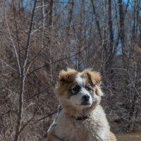 Пёс-барбос :: Vladimir Beloglazov