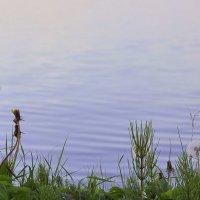 Трава у моря :: Анастасия Меркулова
