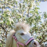 Портрет на фоне цветущих яблонь :: Юра Викулин