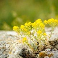 и на камнях цветут цветы..... :: Марина Брюховецкая