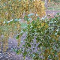 Две вечных подруги Осень и Лето :: Наталья Кочетова