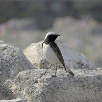 Птицы Херсонеса :: Дядюшка Джо