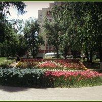 Сквер. Тюльпаны. :: Ольга Кривых