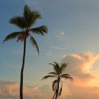 Пальмы у океана. :: Александр Гризодуб