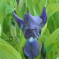 Интересный цветок :: юрий Амосов