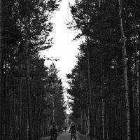 Двое на велосипедах :: Николай