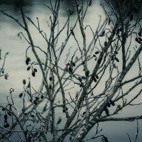 Старая весна :: Natali Novik
