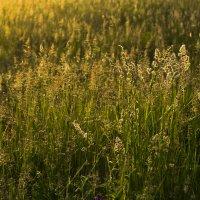 Просто трава :: Александр Крупский