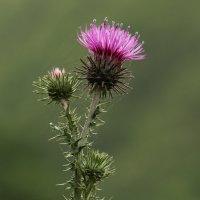 цветок :: Виталий Кириллов