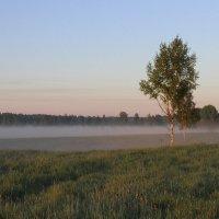 Туман :: Влад В.