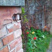Тюльпаны :: Екатерина Чернышова
