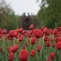 Весенний дождь :: Михаил Фролов