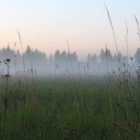 туман :: александр пеньков
