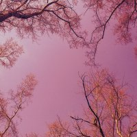 А небо цвета... :: Элизабет Свит