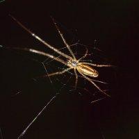Золотой паук :: Андрей Зайцев