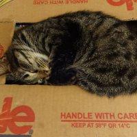 котка на банановом ящикe )) :: Андрeй Владимир-Молодой