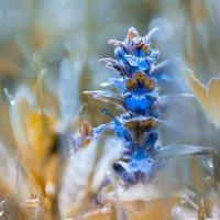весна :: Александр Линник