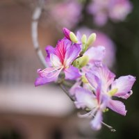 Нежный цвет :: stasik13 Дарья Когтева