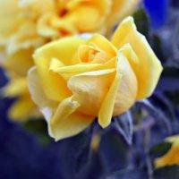 желтая роза :: Alice Madman