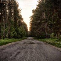 Лесная дорога ... :: Роман Шершнев
