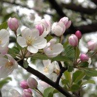 Даже если не для нас пришла весна.... :: Нина северянка