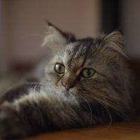 Бафи тестирует новинку от СИГМЫ :: Андрей Фиронов