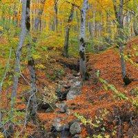 краски леса :: Алина Олицкая