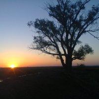 закат :: светлана бедельбаева