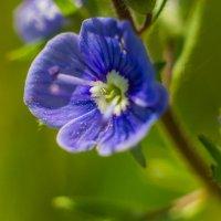 Маленький цветочек :: Даниил Карпов