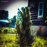 Деревце :: Дмитрий Колесников