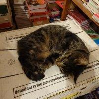 Кошка на книжном складе. :: Андрeй Владимир-Молодой