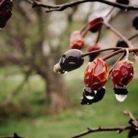 капли дождя :: Дианка Шитько