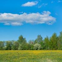 Весна :: Нина Рубан