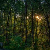 Закат в лесу :: Игорь Нокин