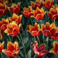 Оранжевые мохнатики :: Минихан Сафин