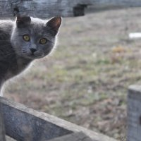 соседская кошка :: Татьяна Калинова