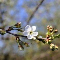 Весна пришла :: Алёна Удалова
