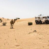 Встреча с обитателем пустыни :: Сергей Виговский