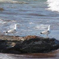 Чайки :: Лэл Коваль
