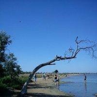 дерево :: Mariya Zazerkalnaya