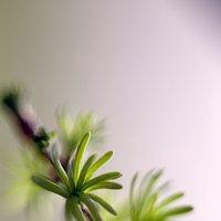 весна :: елена славинскене