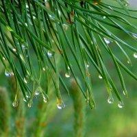после дождя :: Игорь Чичиль