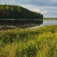 На озере :: Анатолий Тимофеев