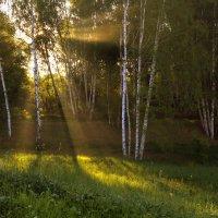 Утро в лесу :: Алексей Окунеев