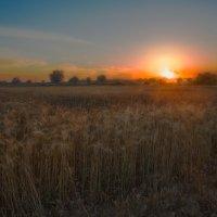 Вечером в поле... :: Вячеслав Мишин