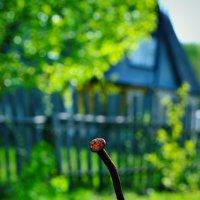 а я такой весь одинокий....а все вокруг цветет... :: Irinka Zharova