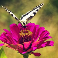 На цветке живет, Пьет цветочный сок :: Татьяна Губина