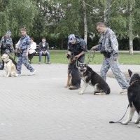 служебные собаки, :: Светлана ~~~